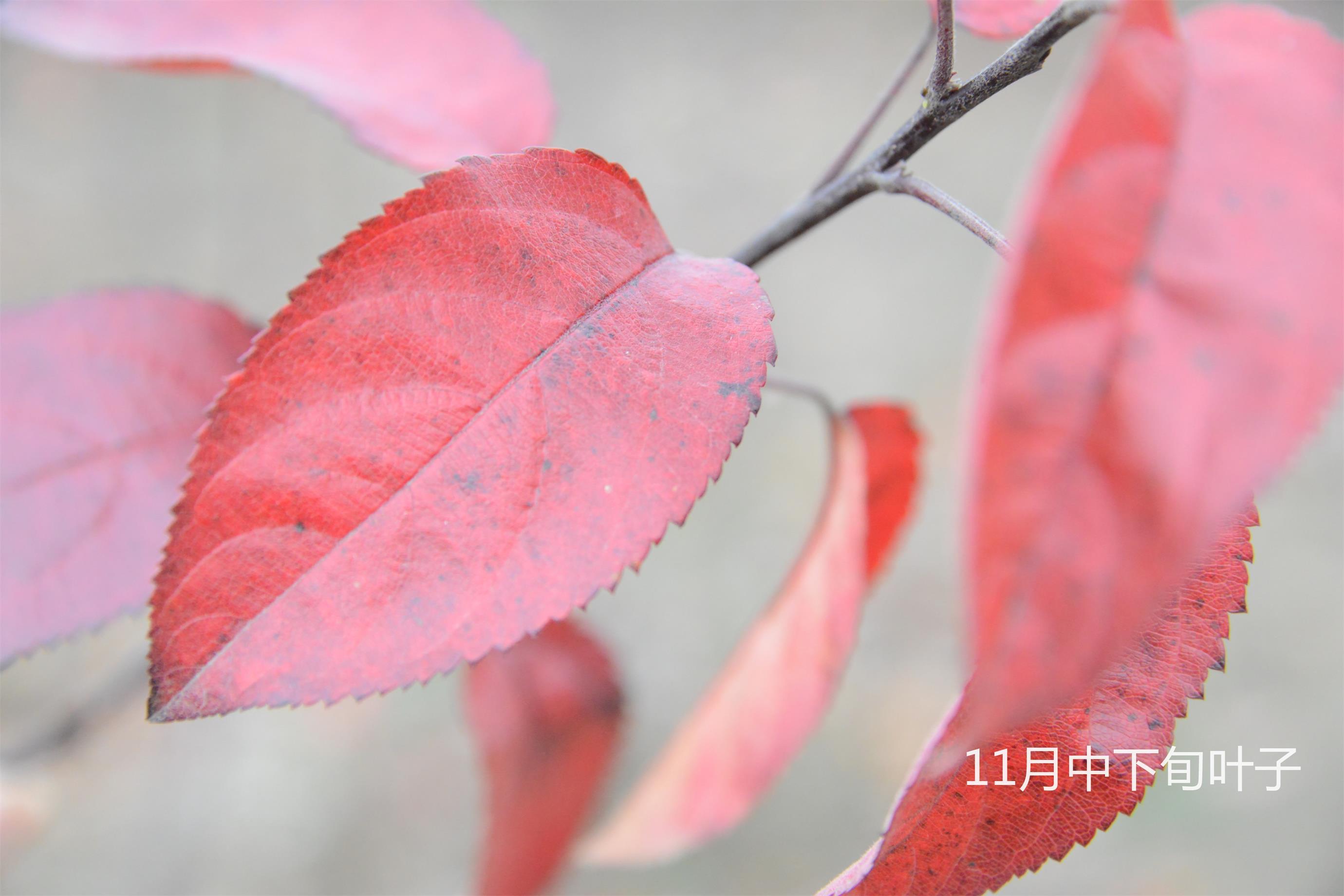 11月中下旬_看圖王.jpg