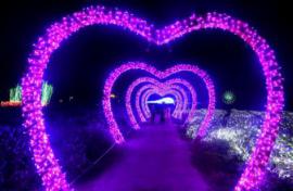 瑞金夢幻燈光節之愛心走廊