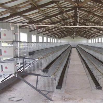 阶梯式蛋鸡笼设备 3.JPG