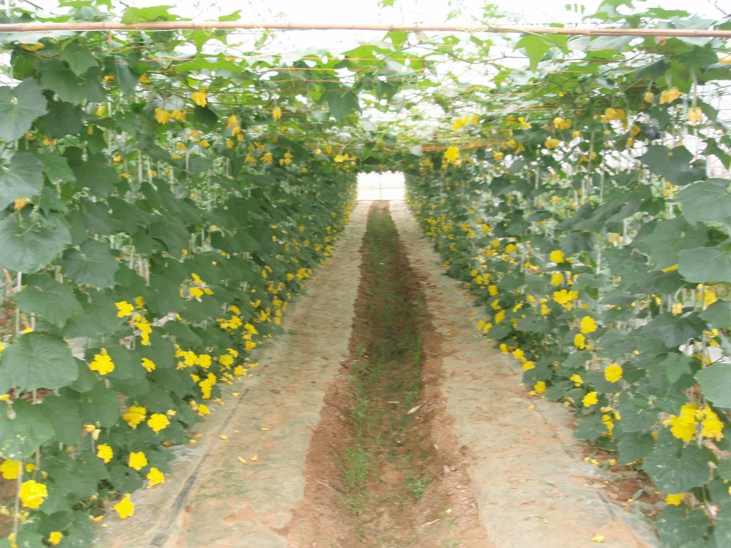富农工程--农民果园