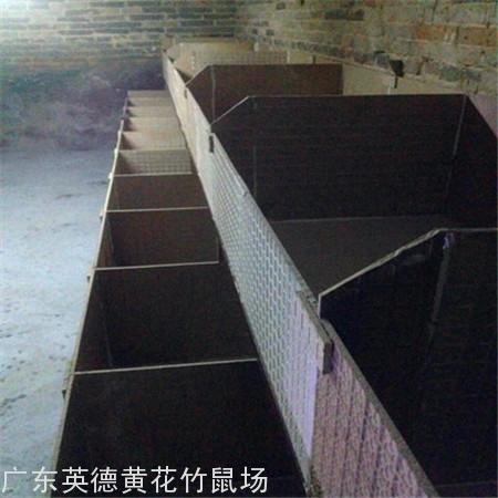 广州竹鼠养殖场