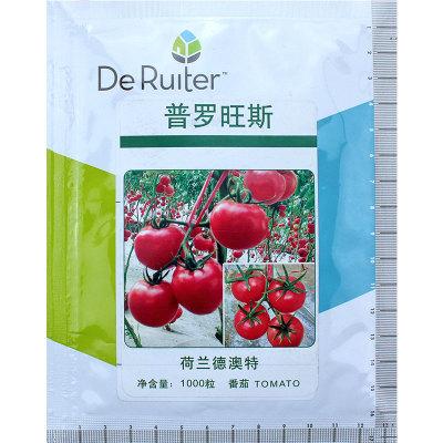 普罗旺斯番茄种子 荷兰西红柿种子 口感好 水果型番茄种子